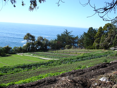 Esalen Submissions
