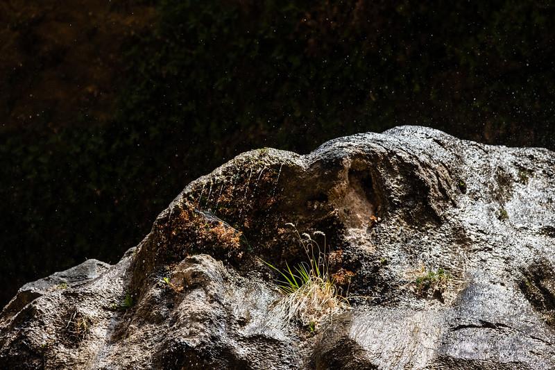 Weeping Rock Closeup