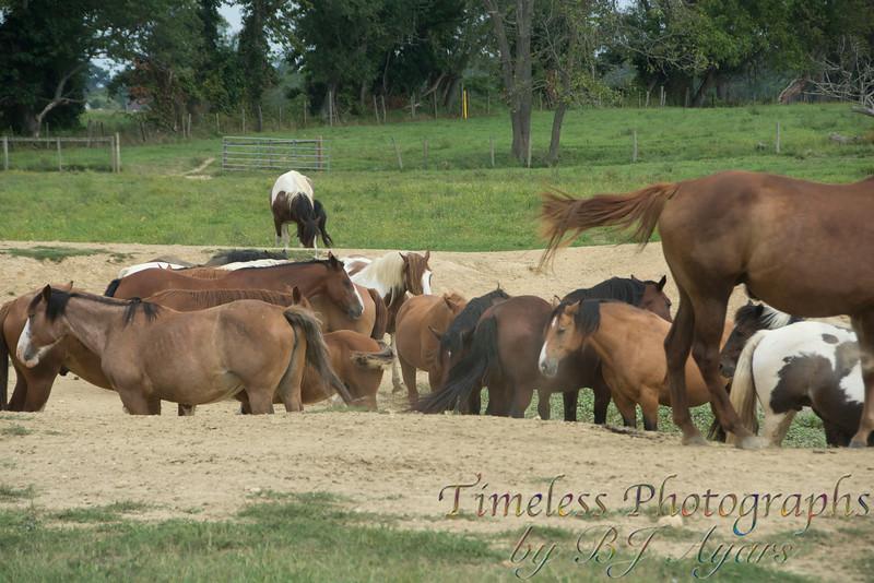 2014_Horses_Woodstown_18.jpg