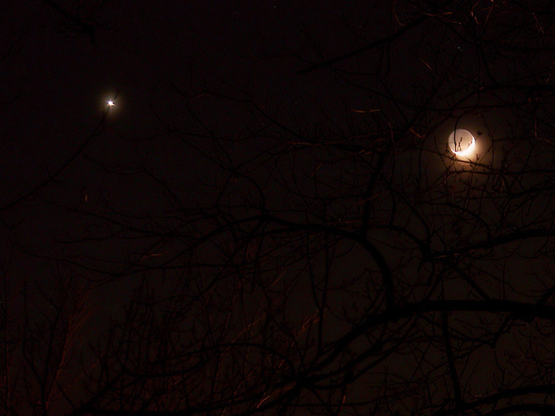 Anohter image this time Venus is just within the branches of a tree, 12-26-2011.