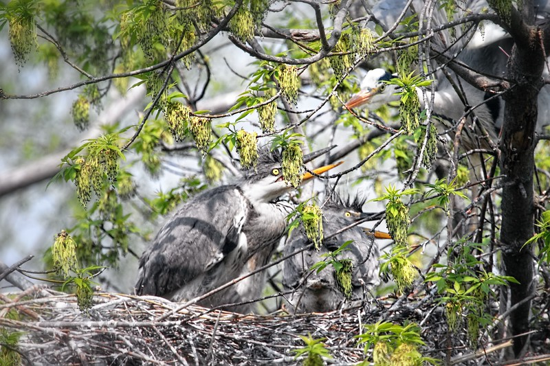 Growing Fast