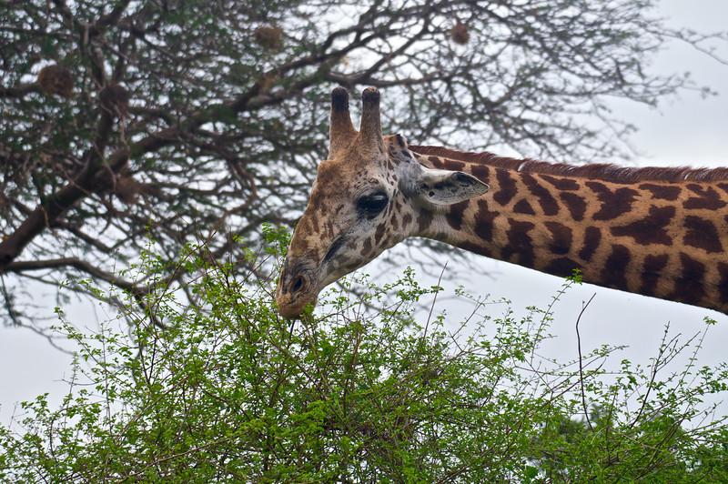 Kenya.Card3.02.2014 227
