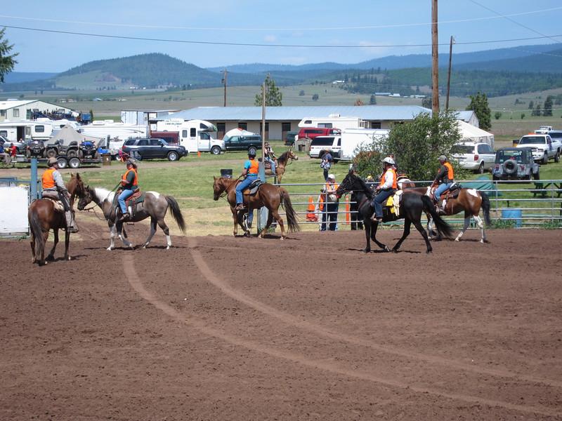Equine SAR demonstration.