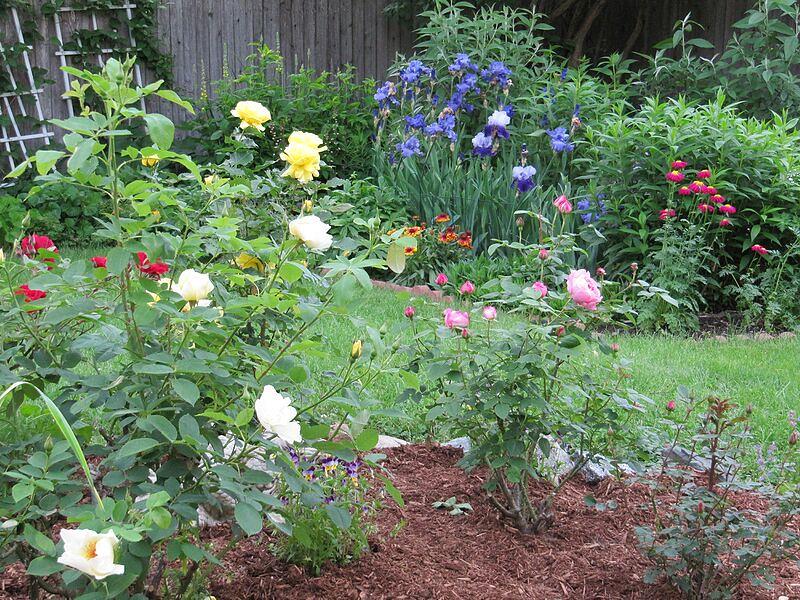 garden-2009-06-0705_std.jpg