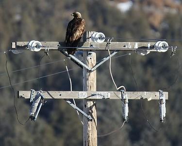 Klamath Falls eagle weekend Jan 2017