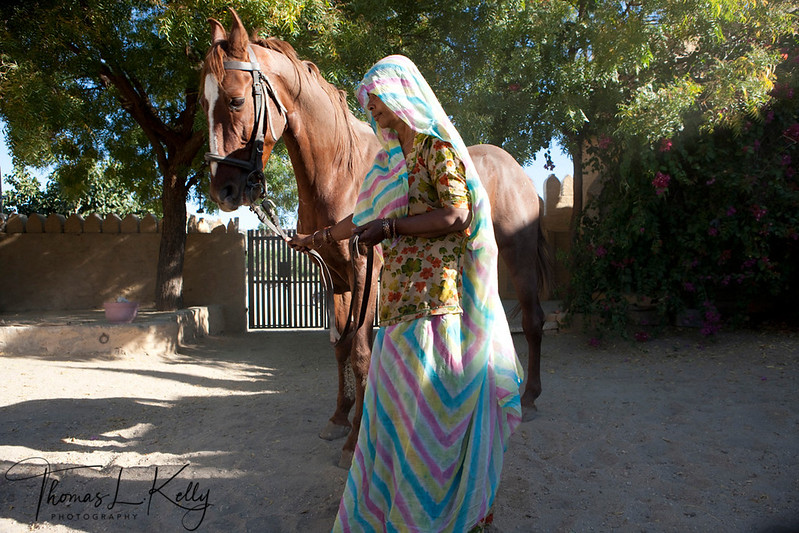 Owner Ajit Singh's mother with her stallion.Owner Ajit Singh's mother with her stallion.
