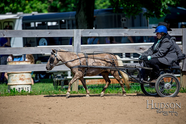 36 Mini Horse Driving Jr