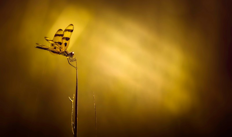 The Magic of Light-389.jpg