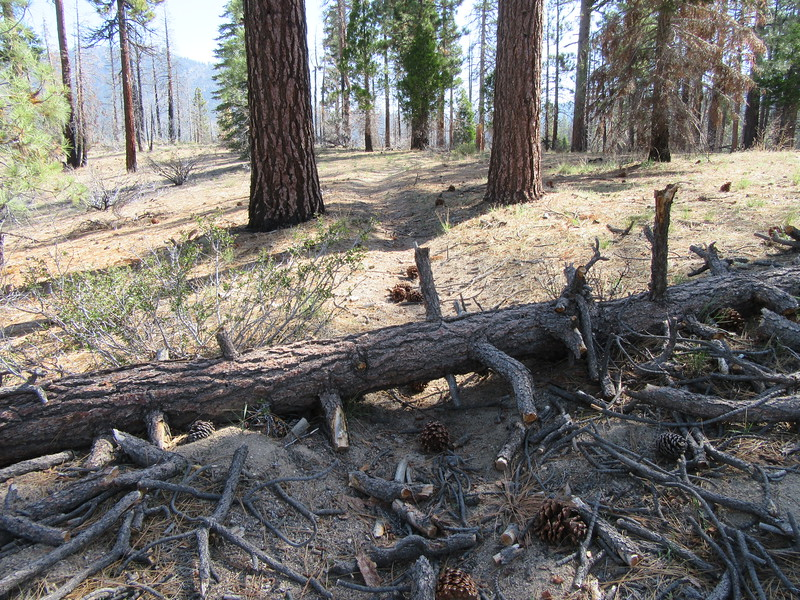 One of the five blowdowns across the trail between Little Kern Bridge and the trail junction for Willow, Round and Trout Meadows, but ...