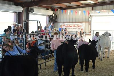 Heifer Show at Trinity Community Fair 2015