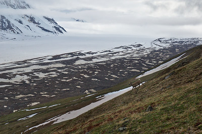 15 Days on the Black Rapids Glacier