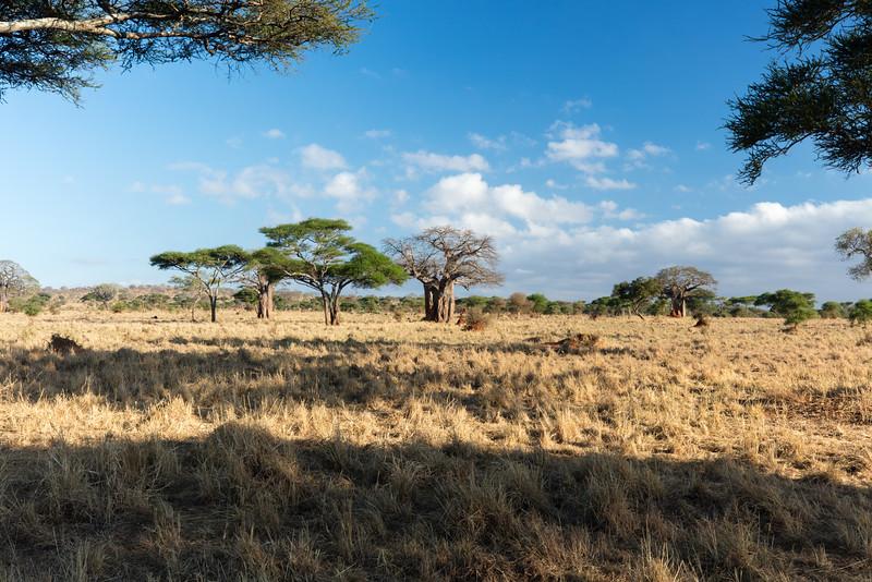 Africa - 102116 - 8071.jpg