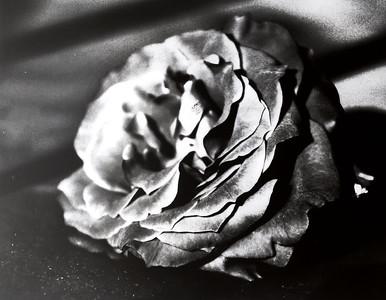 Cyanotype: Darkroom Print