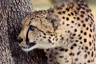 Wild animals and Beasties