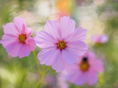 Flowers, flowers flowers