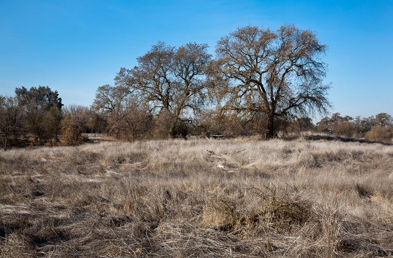 valley oaks.jpg