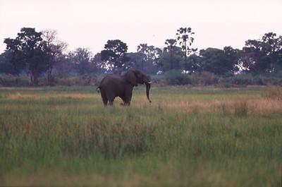 africa0070.jpg