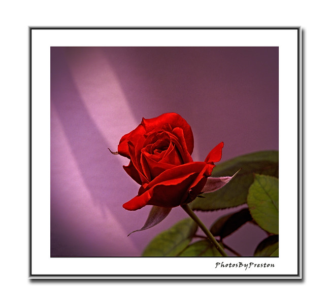 A Rose On The Diagonal