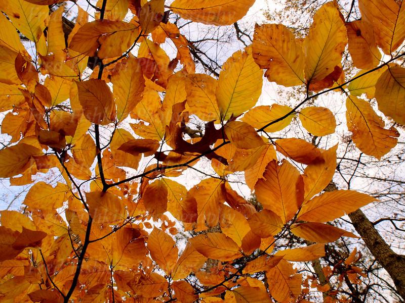 turkey swamp leaves.jpg