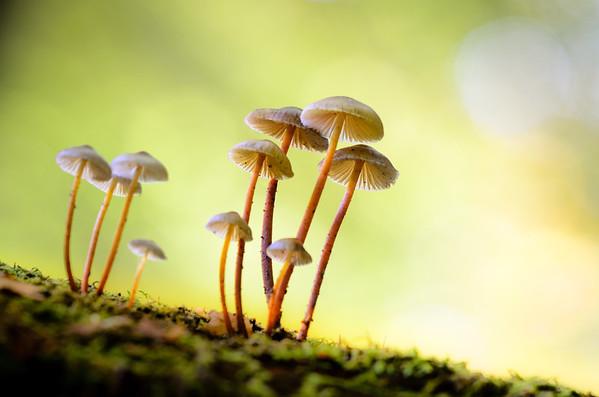 Makro Wald