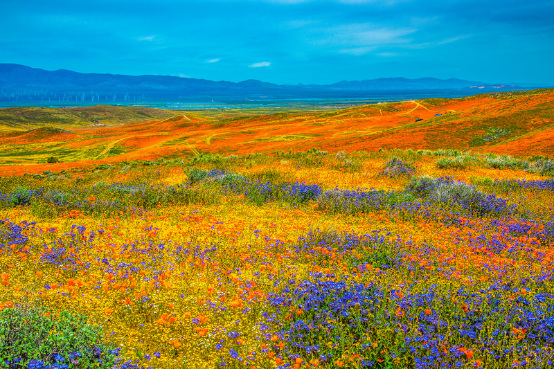 Spring Symphony Antelope Valley Magnum Opus #15: Antelope Valley Poppy Reserve Wildflowers Superbloom Fine Art Landscape Nature Photography: California Fine Art Landscape Nature Photography