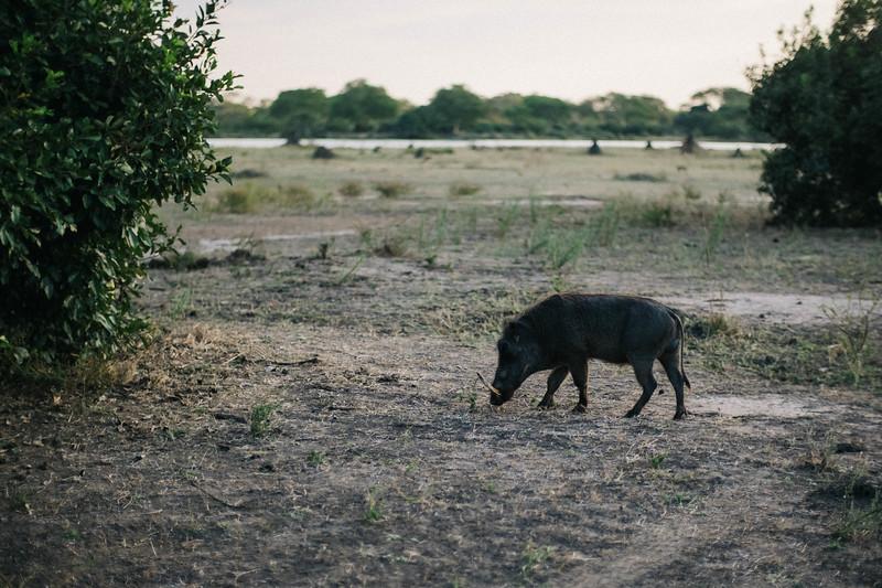 2019_06_24_Global_Malawi_ASJ_D01_Safari-37.jpg