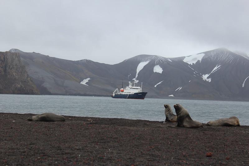 Antarctica 083.JPG