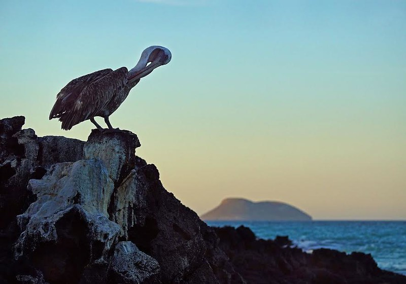 Bird on a rock in the Galapagos
