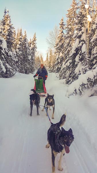 Dog Mushing Fairbanks Alaska