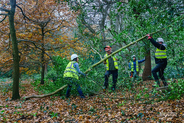 Epping Forest Conservation Volunteers