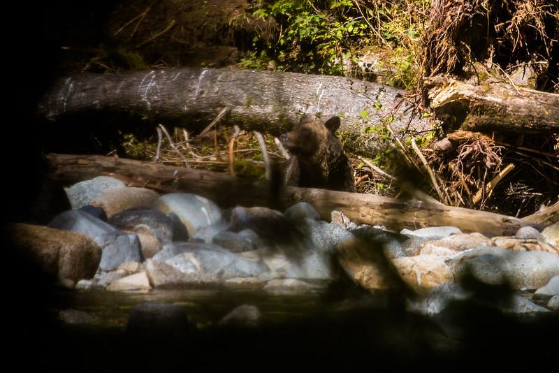 150910_GrizzlyForest_4365.jpg