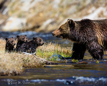 Yellowstone, April 30 - May 1, 2016