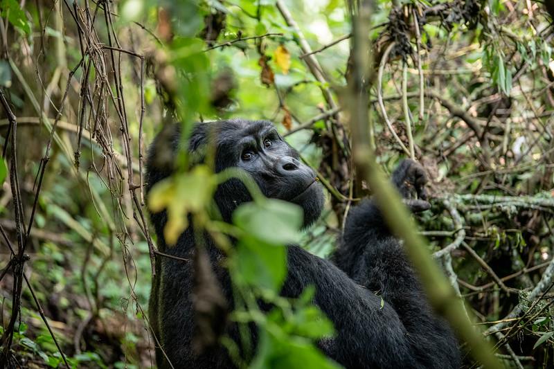 Uganda_T_Gor-1135.jpg