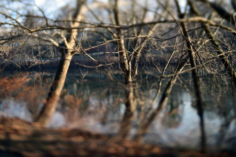 Trees Along the Schuylkill River