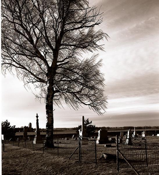 47236604_Tree Cemetary