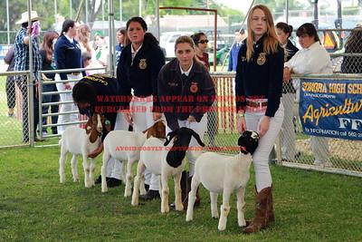 2013 LHVCF Goats