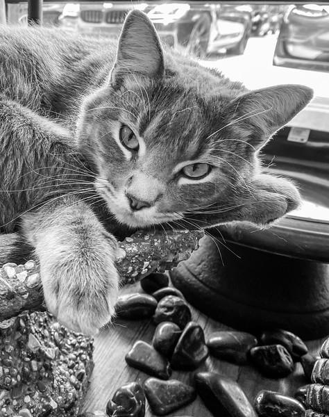 catIMG_0818.jpg