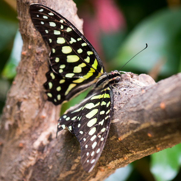 Butterfly 26.jpg
