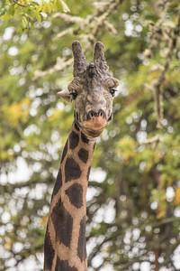 Dec. 10, 2017 - Wildlife Safari Park - 1