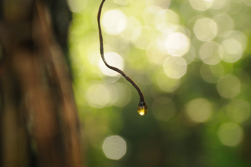 Sunshine through the rain makes such lovely bokeh.