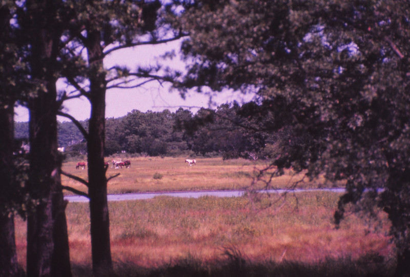 Chincoteague 1981-07 019.jpg
