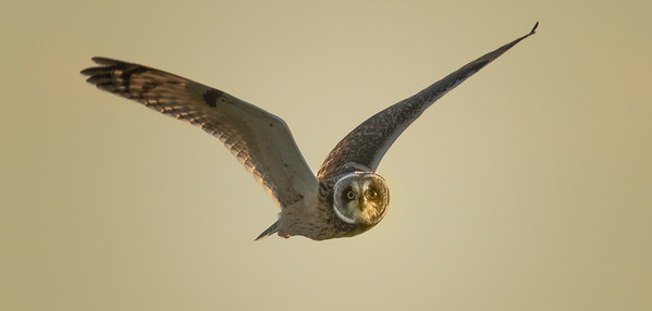 Owls, Hawks, Osprey and Birds of Prey