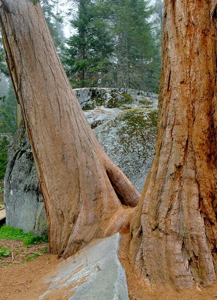 California Day 6 Sequoia 05-30-2017 109.JPG