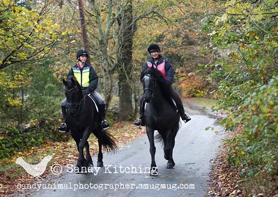 Cal's Cartmel Friesian Experience Oct 2015
