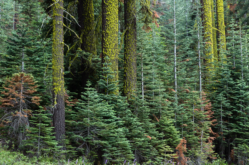 Yosemite Forest-7800.jpg
