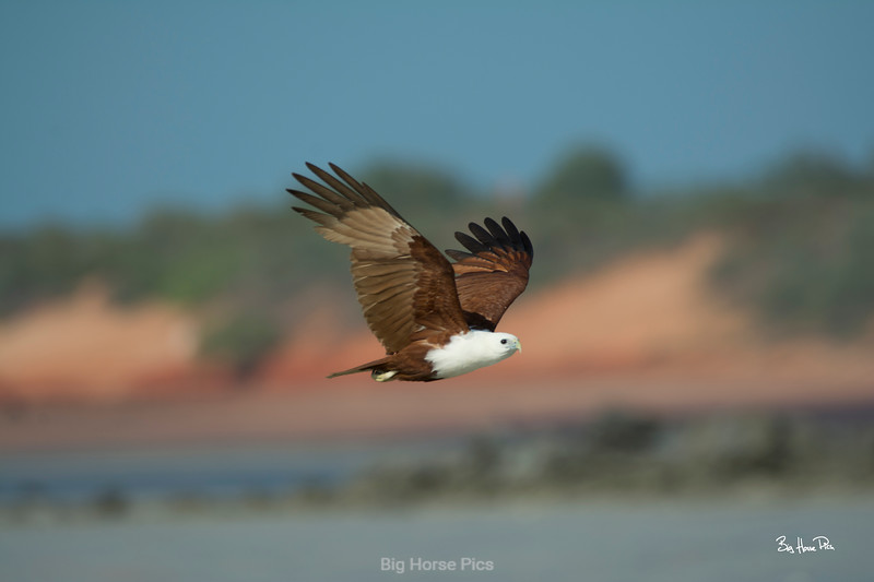 broome eagle b bhp.jpg