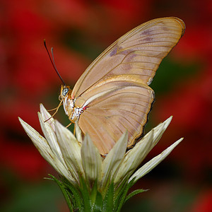 Insects and Butterflys