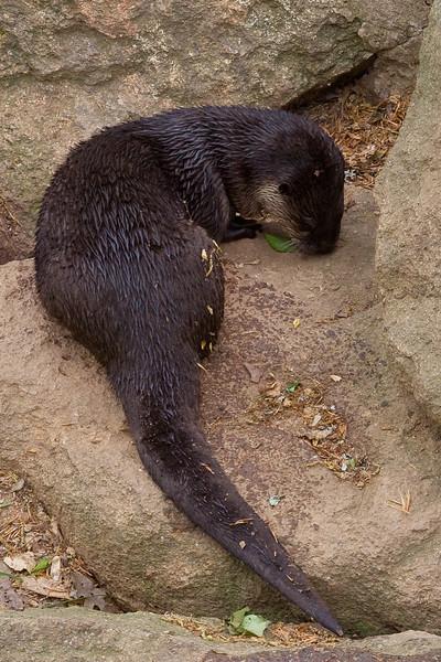 Bear Hollow Wildlife Trail
