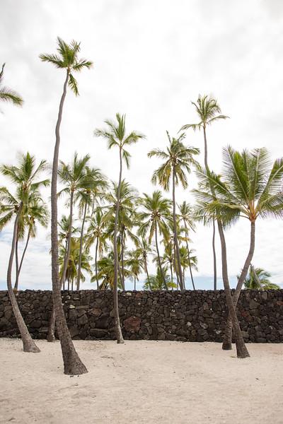 Hawaii2019-338.jpg