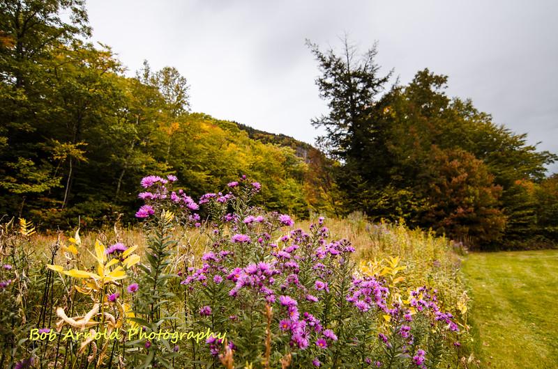 NH Foliage-20.jpg